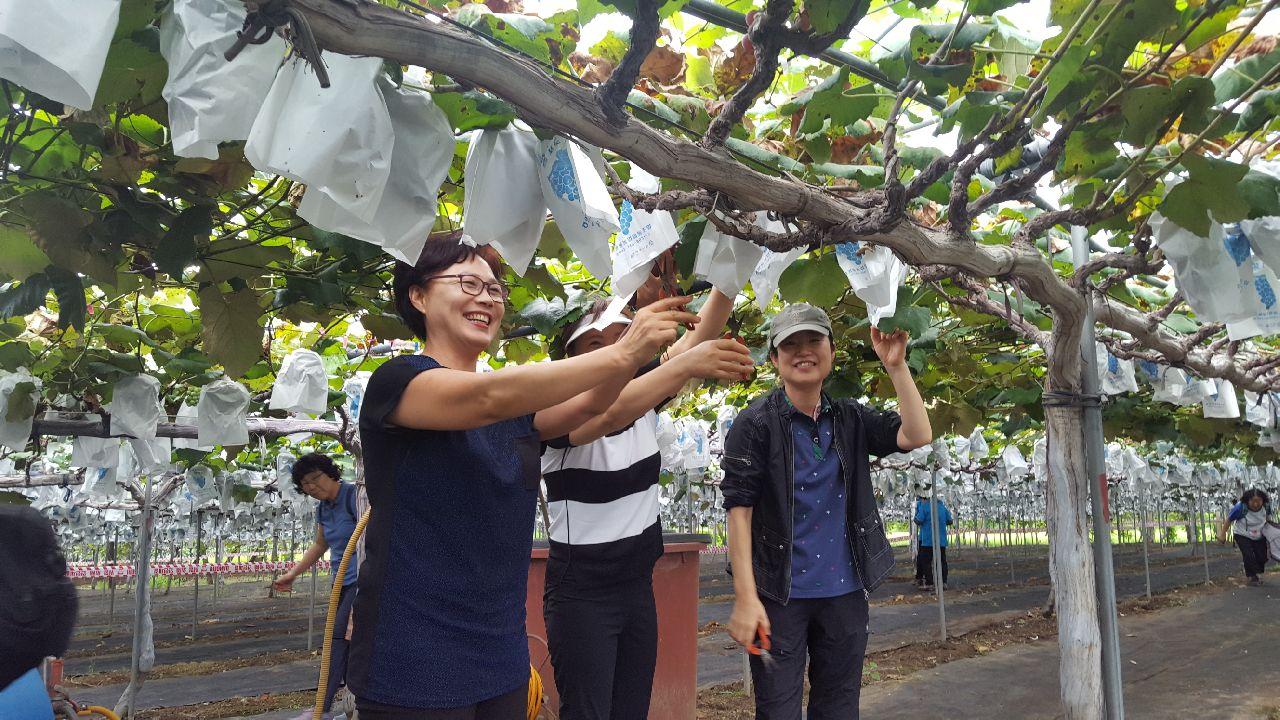 도농교류 활동 농업체험 참가자 모집 안내